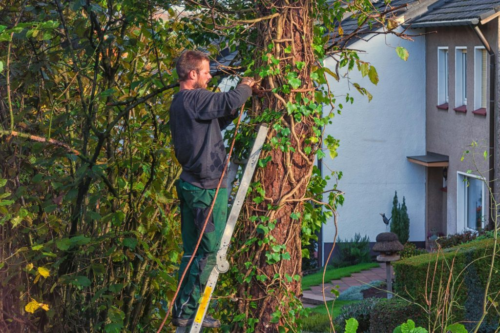 Lake Norman Tree Pros Trimming and Pruning