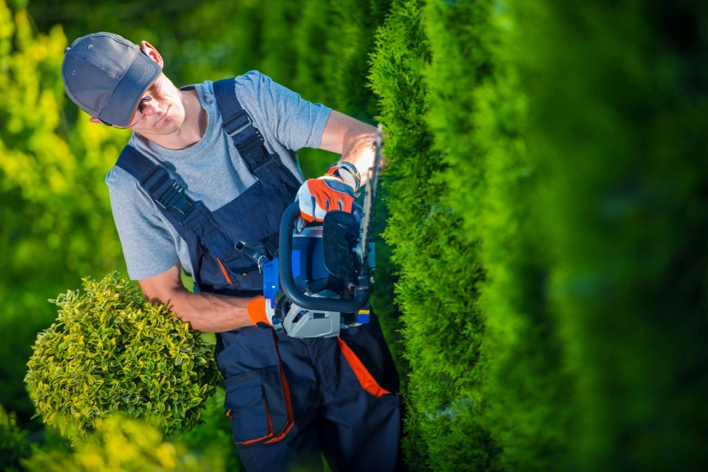 Tree Service Lake Norman - Trimming and Pruning 1