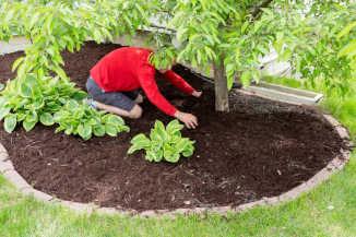 Providing tree care