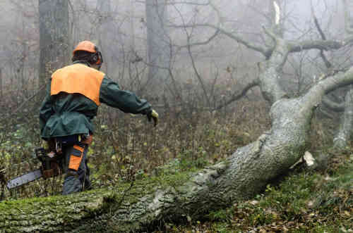 We provide tree removal service for the Charlotte and Lake Norman areas