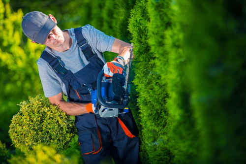 We provide tree pruning and trimming service for the Charlotte, Huntersville, and Lake Norman areas